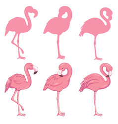 flamingo flamingo set vector image