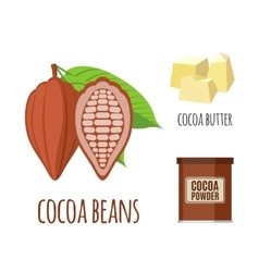Superfood cocoa set in flat style vector image