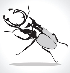Beetle vector