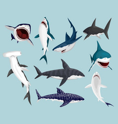 Cartoon sharks scary jaws and swimming angry vector