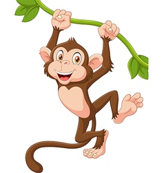 Cute monkey animal hanging on a vine vector image