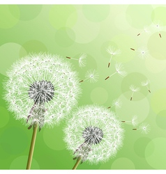 Green background with flowers dandelions vector