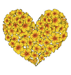 Heart of yellow phlox flowers isolated on white vector
