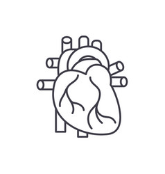 human heart line icon concept human heart vector image