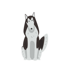 Siberian husky dog character sitting purebred dog vector