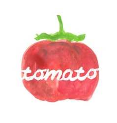 Watercolor pear tomato vector image