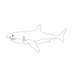 shark coloring pages vector image