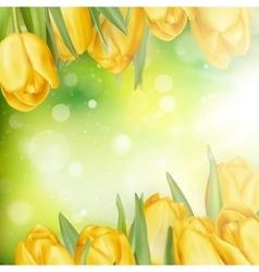 Beautiful yellow tulips EPS 10 vector image vector image