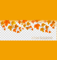 abstract autumn panorama with colorful leaves on vector image