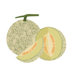 Cantaloupe melon fruit vector