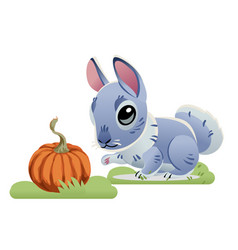 cute gray bunny with pumpkin isolated on white vector image