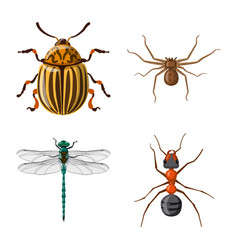 design of insect and fly logo collection vector image
