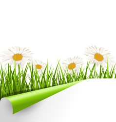 Green grass lawn with white chamomiles and wrapped vector