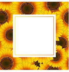 orange yellow sunflower banner card vector image