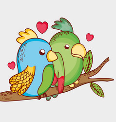 Parrots on the tree branch vector