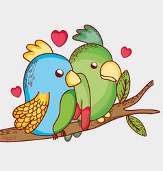 Parrots on tree branch vector