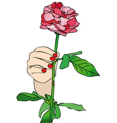 Receive a rose vector
