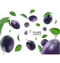 ripe plums with leaves on white background flying vector image