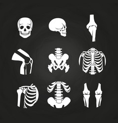 White human skull and bones vector