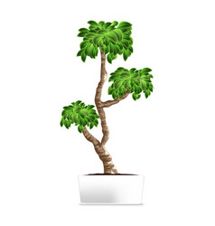 Bonsai tree isolated on white element of home vector