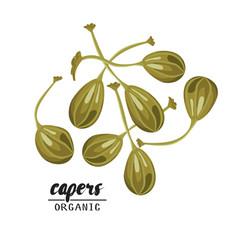 cartoon capers ripe green vegetable vegetarian vector image vector image