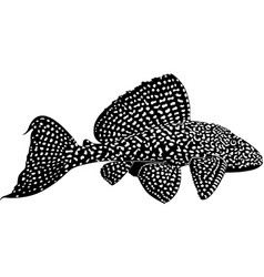 aquarium fish sailfin pleco vector image
