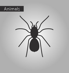 Black and white style icon of tarantula vector