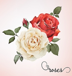 Bouquet of roses watercolor can be used vector