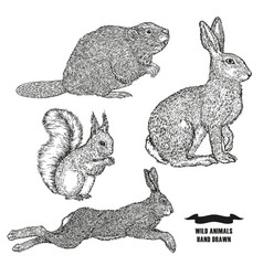 Forest animal hare rabbit beaver and squirrel vector