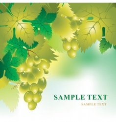 soft background with grape vector image