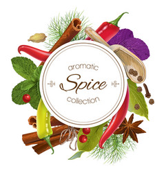 Spice round banner vector image