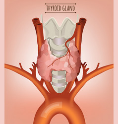 Thyroid gland image vector