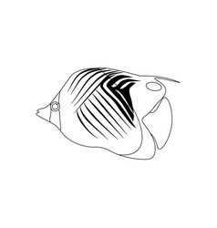 treadfin butterflyfish coloring pages vector image