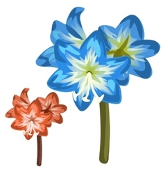 Blue and red flower closeup on white background vector image vector image