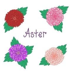 Cute aster set colorful flowers collection of vector image