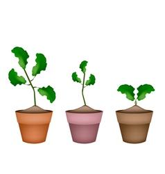 Three fresh limes in ceramic flower pots vector