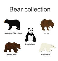 bear species collection vector image