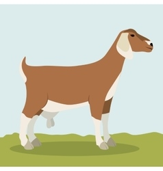 Colorful goat animal design vector