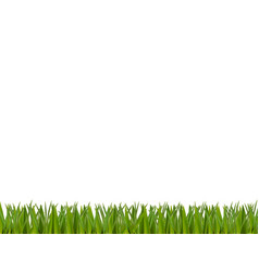 green realistic grass border isolated on white vector image
