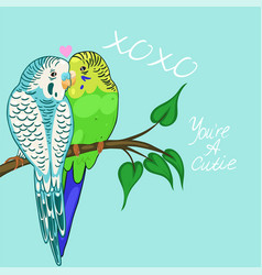 Greeting card with budgies in love blue and green vector