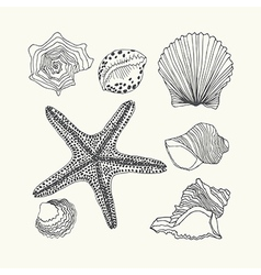 Set with hand drawn sea shell isolated on w vector