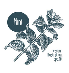 Mint branch for design menu vector