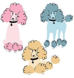 poodle dogs vector image