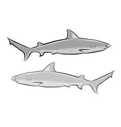 Shark sketch for your design vector image