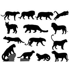 wildcats vector image