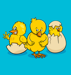 cartoon little chickens hatching from eggs vector image