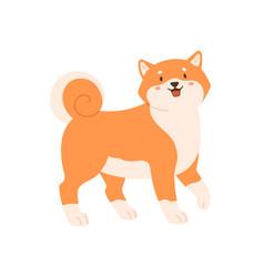 cute kawaii dog shiba inu breed walking vector image