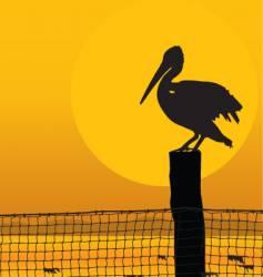 pelican sunset vector image vector image