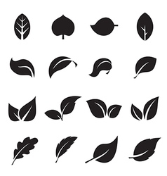 collection leaf icons vector image