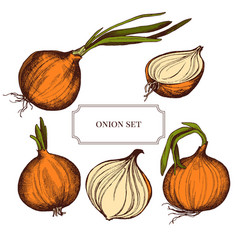 Collection of hand drawn onions highly vector